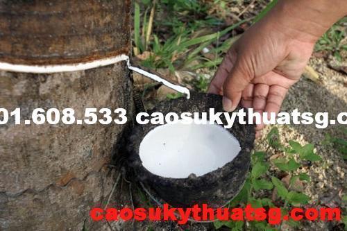 Cao su là gì ? Nguồn gốc của cây cao su từ đâu ? 3